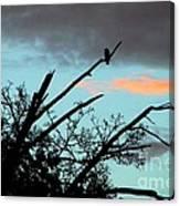 Bird Watching Sunrise Canvas Print