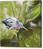 Bird Whirl Canvas Print