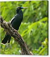 Bird With Blue Eyes Canvas Print