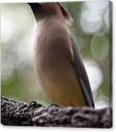 Bird With Bokeh Canvas Print