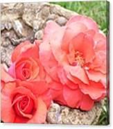 Birdbath Roses Canvas Print