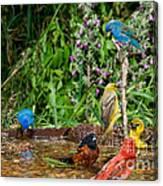 Birds Bathing Canvas Print