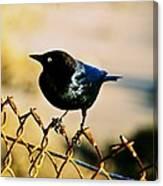 Bird's Eye Canvas Print