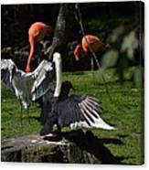 Birds Gather Canvas Print