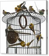 Birds Inside And Outside A Cage Canvas Print