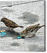 Birds Like Cotton Candy Canvas Print