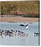 Birds Of Cutler Bay Wetlands 42 Canvas Print