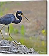 Birds Of Cutler Bay Wetlands 47 Canvas Print