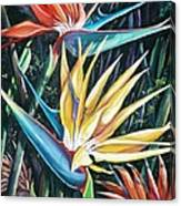 Birds Of Paradise  2   Sold Canvas Print