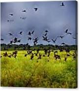 Birds Of The Wetlands V11 Canvas Print