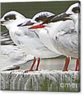Birds On A Ledge Canvas Print