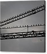Birds On Crane Canvas Print