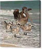 Birds On The Beach Canvas Print
