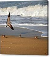 Birds On The Beach Canvas Print