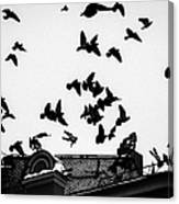 Birds Over City - Featured 3 Canvas Print