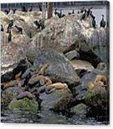 Birds Seals And Sea Lions Canvas Print