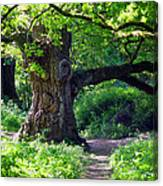 Birnam Wood Scotland Canvas Print