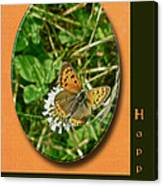 Birthday Greeting Card - American Copper Butterfly Canvas Print