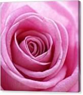 Birthday Pink Canvas Print