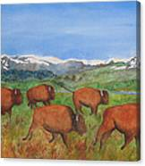 Bison At Yellowstone Canvas Print