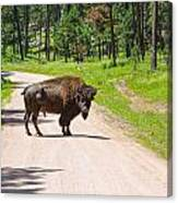 Bison Blocking The Road Canvas Print