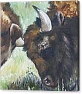 Bison Brawl Canvas Print