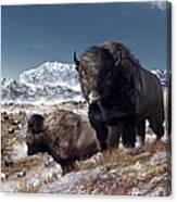 Bison Herd In Winter Canvas Print