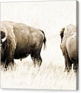 Bison II Canvas Print