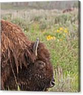 Bison In The Flowers Ingrand Teton National Park Canvas Print