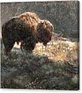 Bison In The Snow Canvas Print