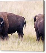 Bison Painting Canvas Print