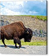 Bison Plodding Along On Alaska Highway-bc-canada Canvas Print