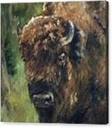 Bison Study - Zero Three Canvas Print