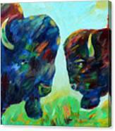 Bison Wisdom Canvas Print