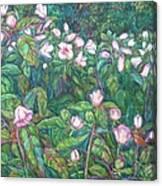 Bisset Park Hibiscus Canvas Print