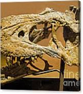 Bistahieversor Dinosaur Skull Fossil Canvas Print