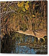 Bittern Stretched Out Canvas Print