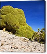 Bizarre Green Plant Bolivia Canvas Print