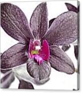 Black And Purple Orchid Canvas Print