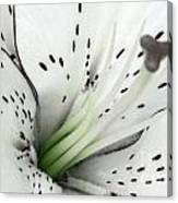 Black And White And A Little Bit Of Green Canvas Print