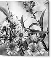 Black And White Asters Canvas Print