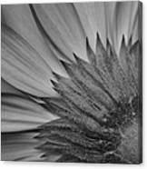 Black And White Blossom Canvas Print
