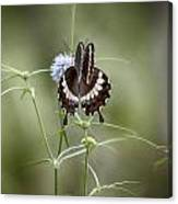 Black And White Butterfly V2 Canvas Print