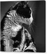 Black And White Cat In Profile  Canvas Print