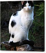 Black And White Cat On Tree Stump Canvas Print