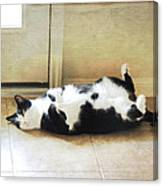 Black And White Cat Reclining Canvas Print