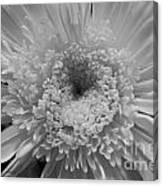 Black And White Chrysanthymum Canvas Print
