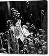 Black And White Daffodil Canvas Print