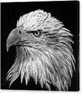 Black And White Eagle Canvas Print
