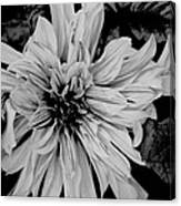 Black And White Floal Canvas Print